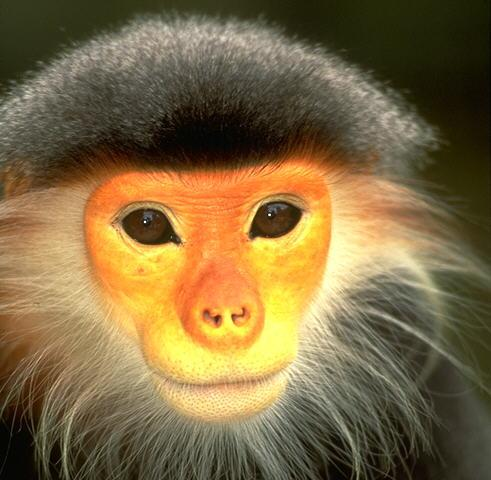 yellowfacemonkey.jpg